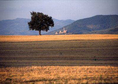Casa Del Mulino Wheatfields