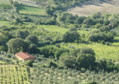 Casa Del Mulino Olive groves, vineyards and fields