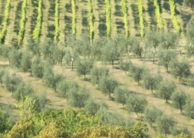 Casa Del Mulino Wood, olive grove, vineyard