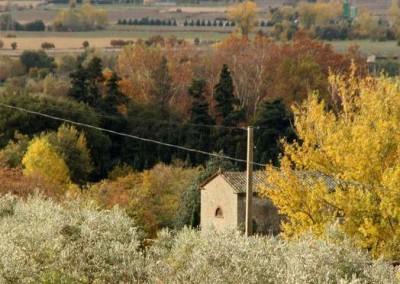 autunno3_olive grove & valleyl
