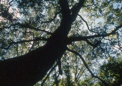 canopy of trees above the stream