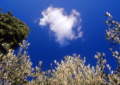 cloud above the garden