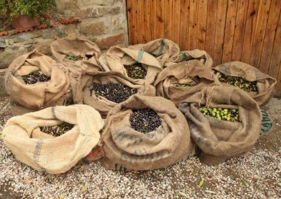 olive sacks