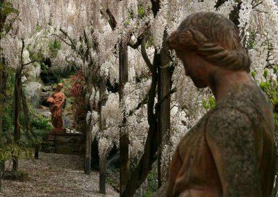 statues amongst wisteria