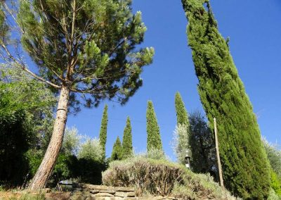 trees in the garden of the house