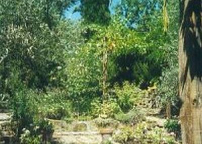 view of garden behind house